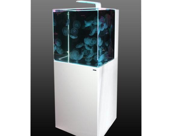 quallen aquarium aurelia 220