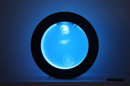 Quallen Aquarium Cubic Orbit kaufen