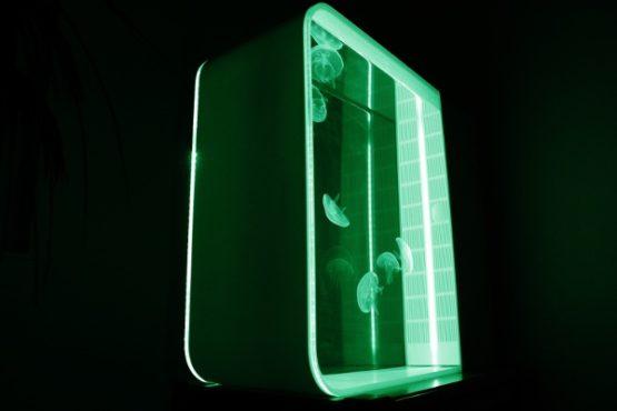 Quallen Aquarium Cubic Pulse 80 kaufen