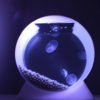 Quallen kaufen für das Jellyfish Art