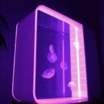 Cubic Pulse 80 Quallen Aquarium